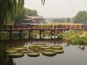 Pekin ancien palais ete