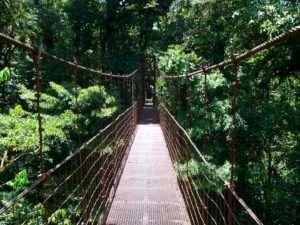 Pont suspendu à Monteverde
