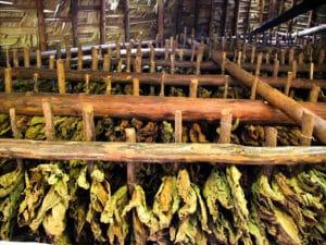 Tabac à Viñales
