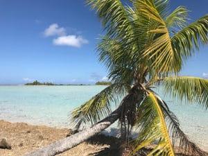 Passe sud palmier