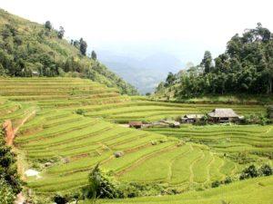 Ha Giang rizière