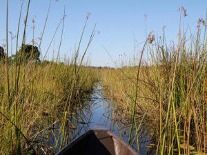 mokoro Okavango