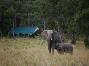 Elephant Peper Camp