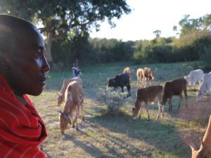 Tribu Masaï avec troupeau
