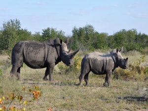 ETOSHA - Rhino