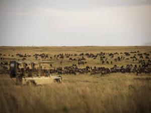 Olakira migration