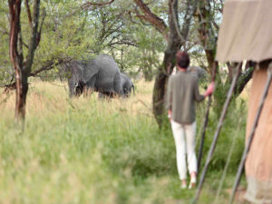 Olakira elephants