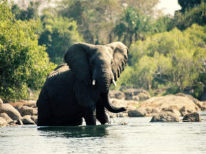 éléphant bain