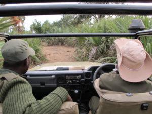 Safari lower Zambezi park